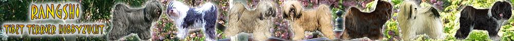 Tibet Terrier Rangshi Hobbyzucht